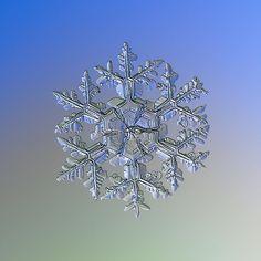 Gardener's dream (alternate), real snowflake macro photo