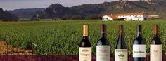 Con la llegada del #verano y el buen tiempo, aquí en #Muga estamos disfrutando de las visitas a la bodega y al viñedo. ¿Te apuntas?