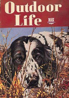 Outdoor Life Oct 1947 Hunting Magazines, Fishing Magazines, Old Magazines, Life Cover, Wildlife Paintings, Springer Spaniel, Outdoor Life, Dog Art, Beautiful Artwork