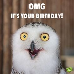 Funny Happy Birthday Images - Happy Birthday Funny - Funny Birthday meme - - Funny happy birthday image with owl. The post Funny Happy Birthday Images appeared first on Gag Dad.