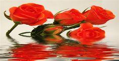 http://sultangazicicekcilik.com/ siparişlerinizi sultangazi çiçekçilikten telefon ile verebilirsiniz.