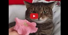 This Cat's Reaction to a Flower is Hilarious