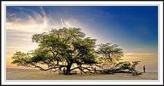 Tree of Life bahrain | Tree-of-Life-bahrain.jpg