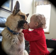 GSD....the protector`