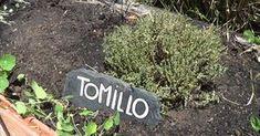 ¿Todavía no te has propuesto cultivar tomillo en el huerto?