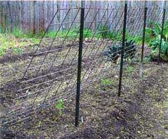 If you grow indeterminate tomatoes, these tomato trellis designs and ideas will make you head on out to the hardware store and get to building! Bean Trellis, Tomato Trellis, Cucumber Trellis, Tomato Cages, Garden Trellis, Trellis Design, Grow Squash Vertically, Tomato Support, Squash Plant