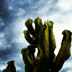 Cacti and stormy sky