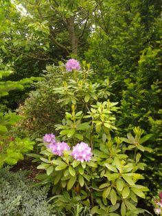 Garden 02 by wolfempress1.deviantart.com on @DeviantArt Coffee Table Books, Garden, Pictures, Plants, Photos, Garten, Lawn And Garden, Gardens, Plant