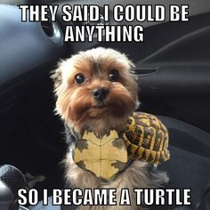 I can't  #yorkie #doglover #dog #puppy #instadogs #pets #turtle #lol #funny #haha #friday #omg #love #inlove #best #followme #follow #like #cute #adorable #meme #fun #happy #baby #boy