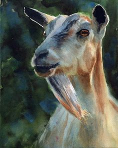 Goat art - watercolor painting by rachelsstudio