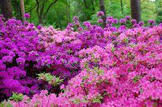 Bremen: Rhododendron Park   No Apathy Allowed