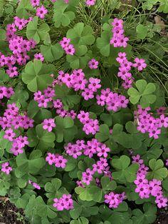 Green Life, Planting Flowers, Health Tips, Plants, Terrazzo, Gardens, Furniture, Gardening, Outdoor Gardens