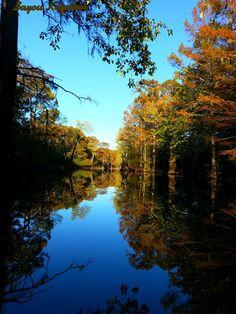 LOUISIANA BAYOU in Autumn - Stephen Odom