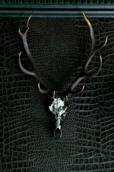 ANGENI 'Spirit' MATTE BLACK 11 POINTER RED DEER Encrusted with mother of pearl Waxed Horns Antler-to- Antler 62 ½ cms Height 92 ½ cms PRICE ON ENQUIRY Each skull is unique If it is no longer available we can make you One very similar or you can Commission your own Bespoke Skull