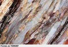 Resultado de imagen para cortezas de eucalipto