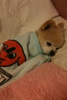 "Sleeping Puppy.. :""> Just like me ;)"