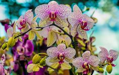Orchids 3 by Edvard - Badri Storman on 500px