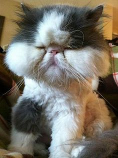 It's not good that this cat got stung but it's still so adorable.