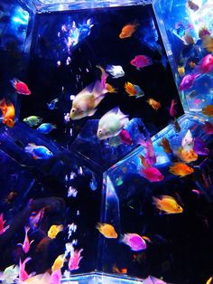 fish tank colorful by * Yumi *, via Flickr