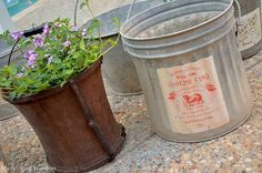 Old Buckets for planting