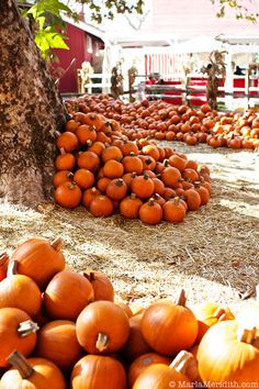 I want to live somewhere that every fall I can watch the leaves change. Where I can pick my own pumpkin..
