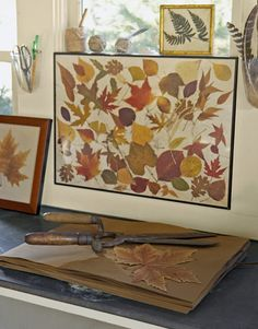 A framed collage of pressed leaves. *Step-by-step instructions for how to press leaves: http://www.countryliving.com/crafts/projects/how-to-press-leaves-1108