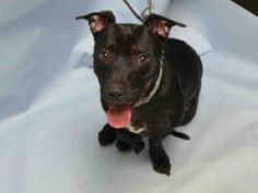 SUPER URGENT 2/20/17 SOCA – A1022772  **RETURNED 2/19/17, DOH – B HOLD**  NEUTERED MALE, BLACK / WHITE, PIT BULL MIX, 3 yrs OWNER SUR – EVALUATE, HOLD FOR DOH-B Reason BITEPEOPLE Intake condition EXAM REQ Intake Date 02/19/2017, From NY 11233, DueOut Date 02/19/2017,