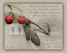 """Tutorials Paint Shop Pro - PSP - """"Butterfly""""-CréaBarbouille.fr"""