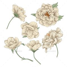 Buy Floral Design Elements by ranarts on GraphicRiver. This is vector illustration of Flower Set Botanical Drawings, Botanical Illustration, Illustration Art, Illustrations, Pattern Art, Vintage Floral, Design Elements, Floral Design, Tattoo Designs