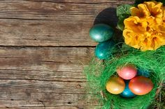 easter eggs in nest on old wooden background with yellow flower
