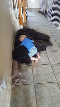 I Love my Puppy Dog. He can be such a Nice Fluffy Newfie Pillow. Huge Dogs, Giant Dogs, Cute Baby Animals, Animals And Pets, Cute Puppies, Dogs And Puppies, Doggies, Corgi Puppies, Big Fluffy Dogs