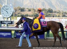 Beholder after winning the 2016 Breeders' Cup Distaff (USA-G1) (photo: Bob Mayberger/Eclipse Sportswire/Breeders' Cup)