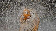 Ganadora del concurso fotográfico anual de National Geographic. VÍDEO de las mejores imágenes: http://www.rtve.es/alacarta/videos/telediario/concurso-fotografico-anual-national-geographic/1652260/#