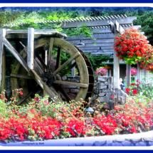 nice setting for an old mill water wheel flower garden