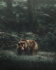 woods bear by Andrés Calvo Jr. nature woodland photography, green brown haunting wilderness wild woods bear by Andrés Calvo Jr. Wildlife Photography, Animal Photography, Red Photography, Canon Photography, Beautiful Creatures, Animals Beautiful, Animals And Pets, Cute Animals, Tier Fotos
