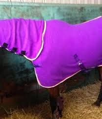 Purple Sheep Fleece Horse Rug Google Search