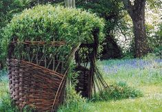living willow structure - Google Search