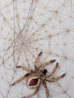 Amazing embroidered spider from our class in Maclean today * embellish embroidery
