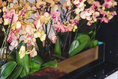 Learn how to make an orchid plant rebloom over and over again. You will be excited to learn the secret and we have a video tutorial to show you how.