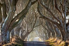 Dark Hedges is a beautiful avenue of beech trees dating back to the 18th century. The eerie avenue, in Northern Ireland, is said to be haunted by the 'Grey Lady' who appears at dusk among the trees and silently glides along the roadside.