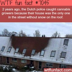 How the Dutch police caught cannabis growers - WTF fun facts