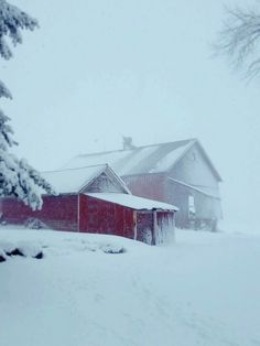 I remember those cold, winter morning walks to the barn