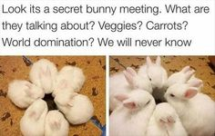 15 Hilarious and Adorable Bunny Memes