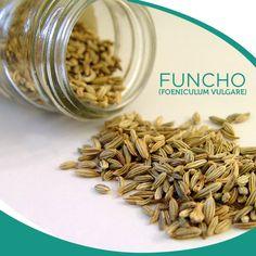 O funcho (Foeniculum vugare Miller) é uma planta medicinal anti-inflamatória, estimulante, digestiva, diurética e expectorante.Entre em contato e saiba mais sobre esse produto!    #santosflora #extratossecos #especiarias #cha #ervasmedicinais #ervasaromaticas #saude #dryextract #tea #spices #medicalherbs #aromaticherbs #health  -  www.santosflora.com.br  + 55 11 3195-0300 | 11 2091-8787