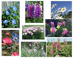"""""""The Charm of a Cottage Garden""""  ~ by Southern Lagniappe. Nice list of cottage garden plants & some ideas.....:)"""
