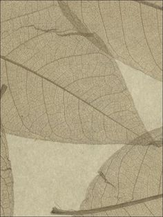 wallpaperstogo.com WTG-121052 Ronald Redding Grass & Strings Wallpaper