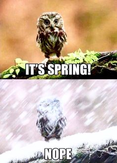 "It""'s Spring! Nope! Baby, it's still cold outside!"