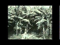 Plantains and Bananas - Noah Peterson