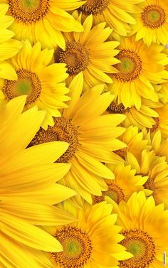 New Wall Paper Aesthetic Pastel Yellow Ideas Yellow Aesthetic Pastel, Flower Aesthetic, Red Aesthetic, Flower Backgrounds, Wallpaper Backgrounds, Tumblr Yellow, Illustration Blume, Sunflower Wallpaper, Yellow Sunflower