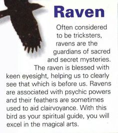 Your Animal Spirit Guide for January 21 is The Raven – Witches Of The Craft® Spirit Animal Totem, Animal Spirit Guides, Animal Totems, Fox Spirit, Libra, Animal Medicine, Power Animal, Crows Ravens, Bohol